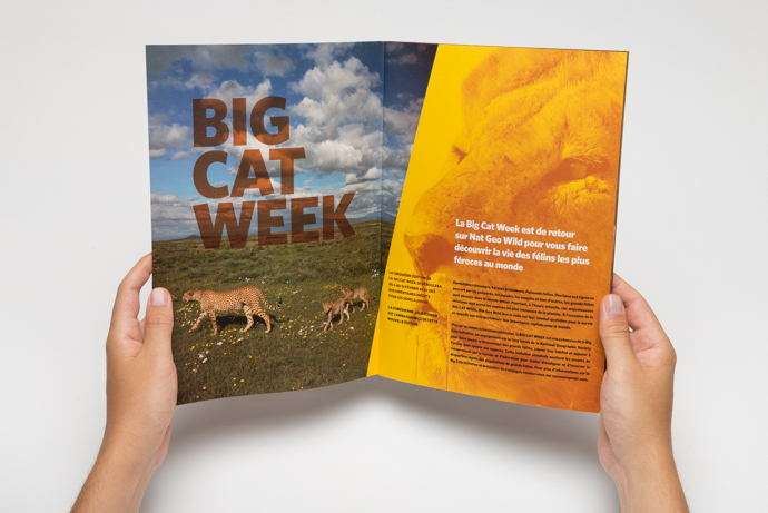 Big Cat Week – National Geographic Channel